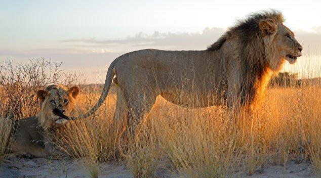 lion-banner.jpg